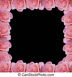 pink rose border vector