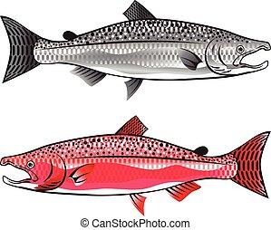 rei, Salmon., prata, e, Spawning.,