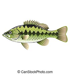 Largemouth Spotted Green American Bass Vector
