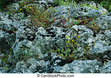 mossy rock texture three - on a rocky surface and small...