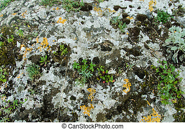 mossy rock texture two - on a rocky surface green, gray and...
