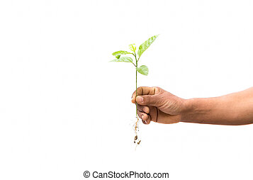 Concept successful hand holding new life plant isolated -...