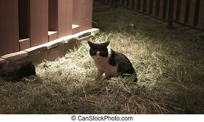 Shy cat sitting on the grass in nighttime in spot of light,...