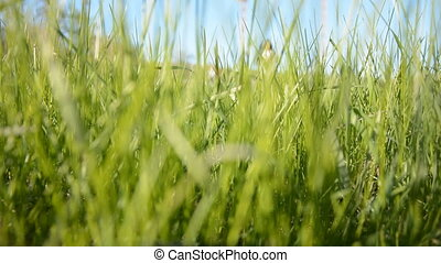 Green grass on a background of running athletes Young man...