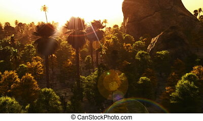 Vibrant colors palm trees summertime sunset aerial