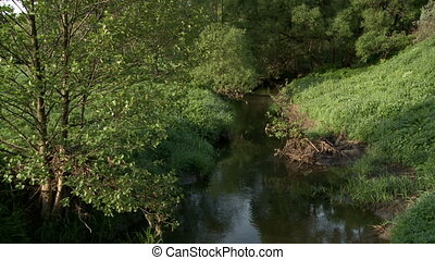 Nature View of beautiful creek in forest - Summertime View...