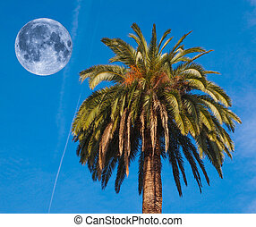 Palm tree and moon - Palm tree with full moon over blue sky