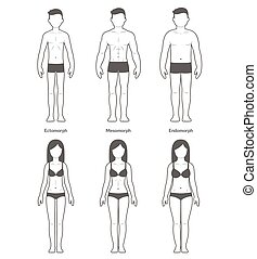 Male and female body types: Ectomorph, Mesomorph and...