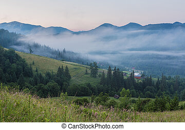fir trees on meadow between hillsides with conifer forest in fog