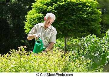 Man wartering the plants - Man carefully wartering the...