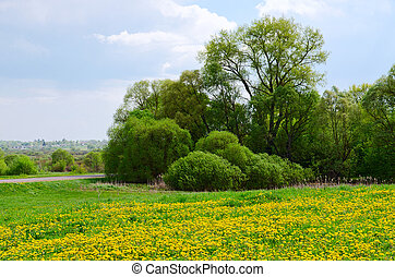 May landscape with blossoming dandelions - May landscape...