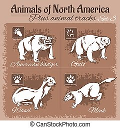 North America animals and animal tracks, footprints Vector...