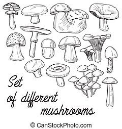 Set of different mushrooms - Mushrooms set Vector...