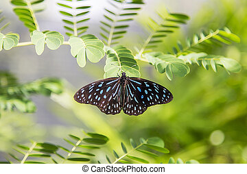 Butterfly from Bai Orchid and Butterfly Farm at Chiang Mai,...