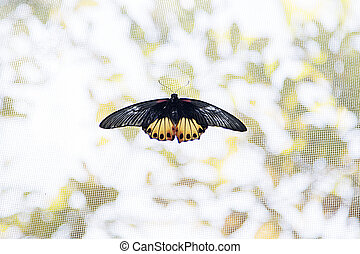 Butterfly - Butterfliy from Bai Orchid and Butterfly Farm at...
