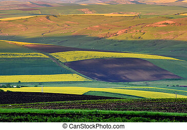 Crops field. Agricultural background with different plants culture