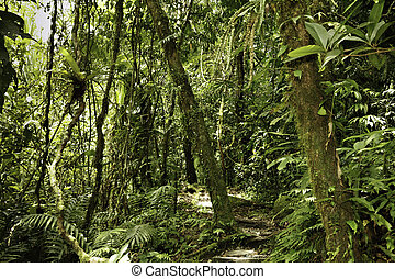 rainforest - jungle in Bolivian pre mountain rainforest in...