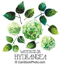 Watercolor hydrangea set isolated on white background....