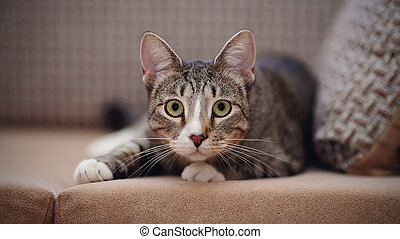 The striped cat on a sofa. - The striped cat lies on a sofa.