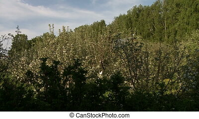 Nature. View of flowering trees in garden