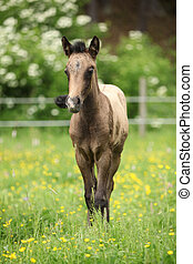 Amazing foal on pasturage - Portrait of amazing brown foal...