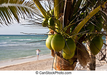 Coconut Palm Tree on Beach witih Woman in Background - A...