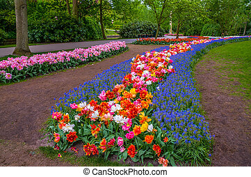 Colorful flowers paths, Keukenhof Park, Lisse in Holland