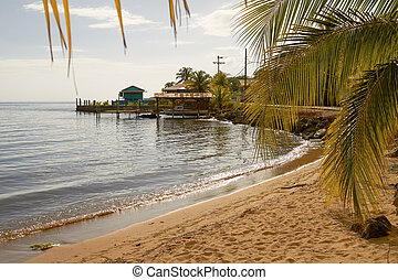 Relaxing view of a beach and palms at island of Roatan in...