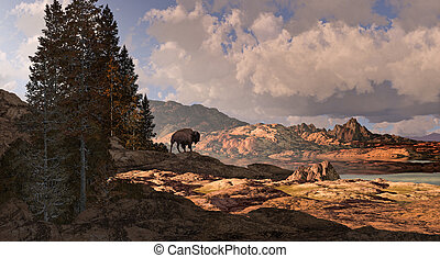 Mountain Buffalo - Buffalo overlooking a Rocky Mountain...