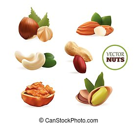 Vector Realistic Collectiom of Nuts. Isolated on White Background
