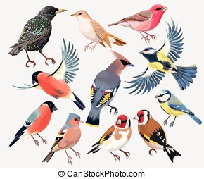 Set of songbirds - Vector set of colorful high detailed...