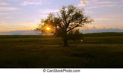 Big tree on sunset background