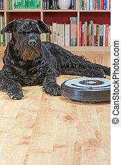 Hairy dog and the robotic vacuum cleaner.