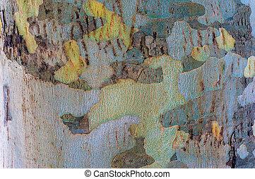eucalipto, árvore, cima, textura, tronco, fim