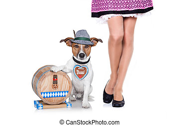 beer drunk dog - jack russell dog with beer barrel and...