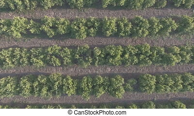 Aerial view of orange tree field with rabbit, flat color -...