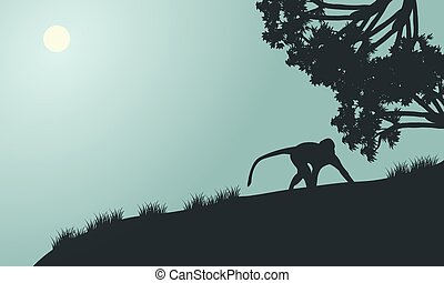 Monkey silhouette in the hills with gray backgrounds