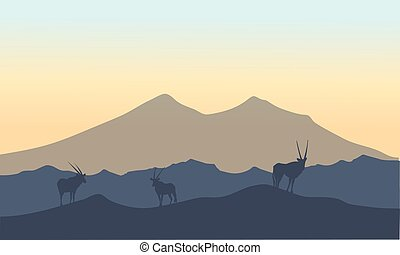 Antelope in hills scenery of silhouette at sunrise