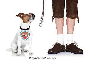 bavarian dog and owner - jack russell dog with leather leash...
