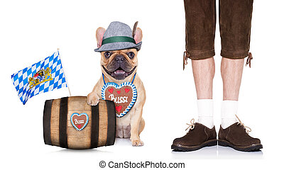 bavarian dog - french bulldog dog with beer barrel and...