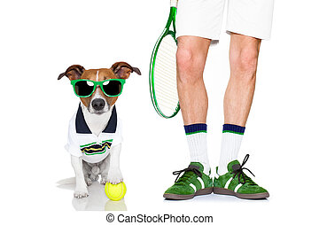 dog tennis ball player - jack russell dog with owner as...