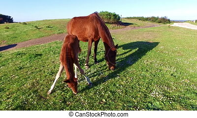 Mare with her foal in Portugal - Mare with her foal in the...