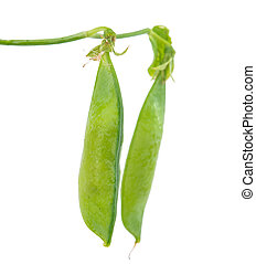 green pea pod on white background