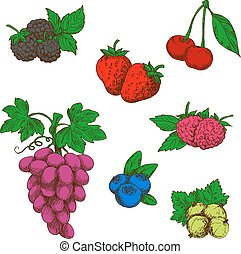 Wild forest and garden fruits colored sketches - Flavorful...