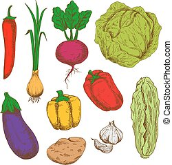 Fresh vegetables sketches for agriculture design - Sketchy...