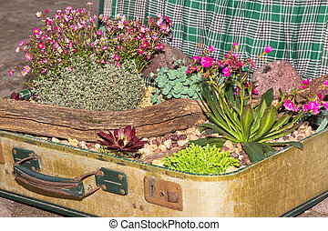 Decorative planted succulents in a suitcase. - Decorative...