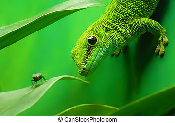 green gecko lizard on the vertikal green wall surrounded by...