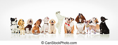 large group of curious dogs and puppies looking up at...