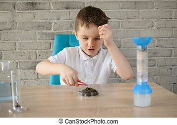 Little 6 year old boy examines the acidity of the soil at...