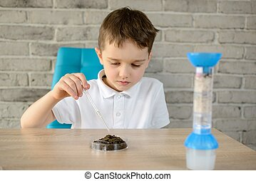 Little boy with a pipette examines a sample of soil